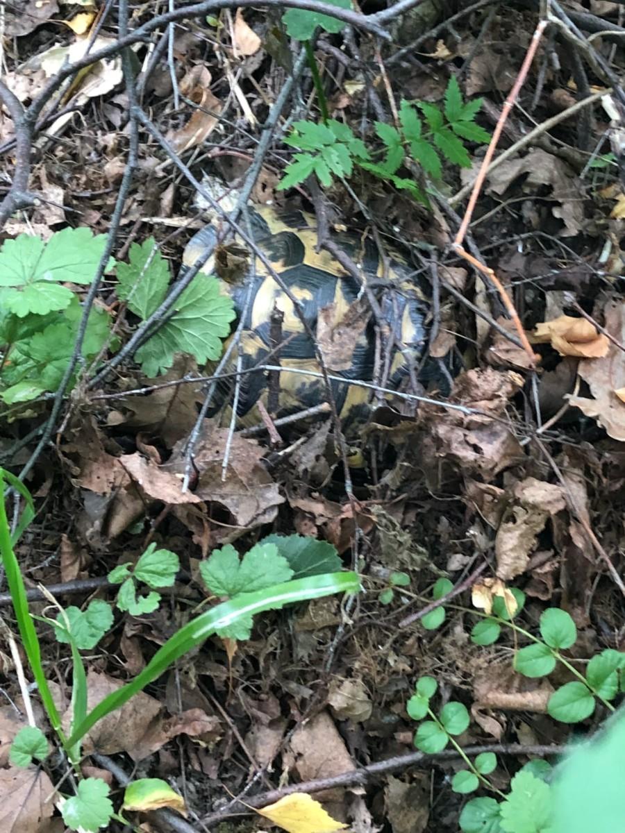 Сухопутные черепахи в домашних условиях