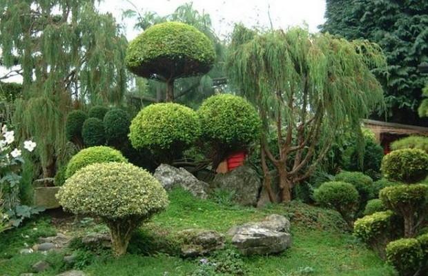 Фигуры из деревьев