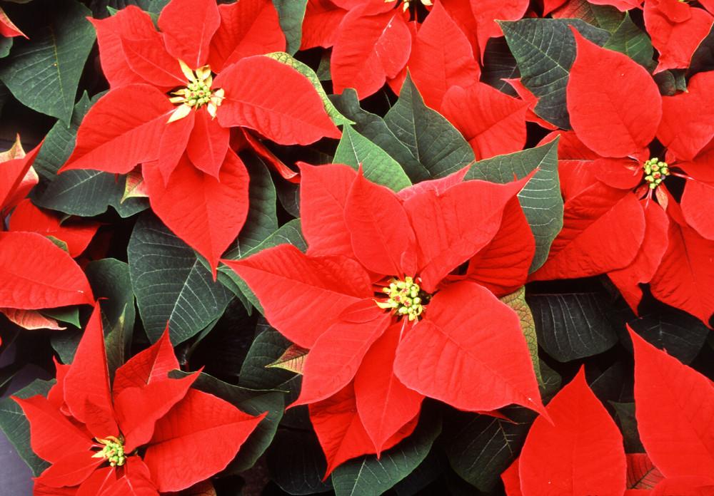 Цветы в новогоднем интерьере