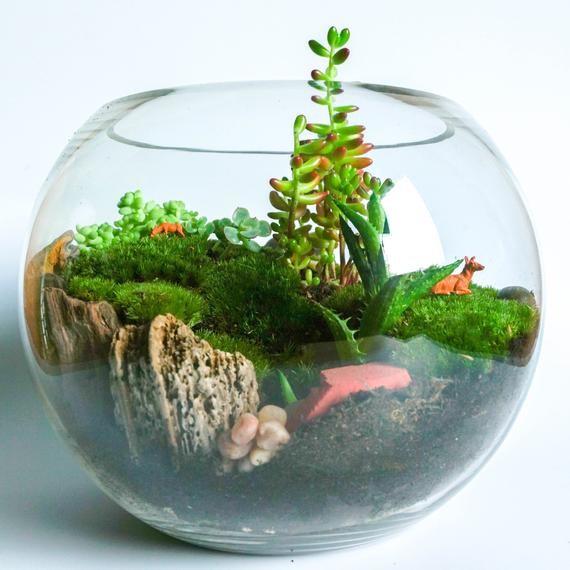 Стеклянный аквариум для суккулентов