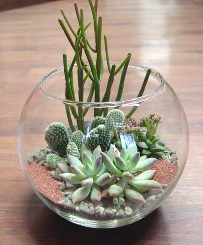 Стеклянный аквариум для комнатных суккулентов