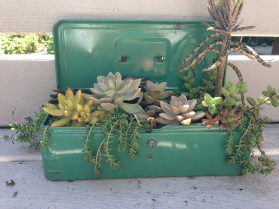 Посадка суккулентов в чемодан