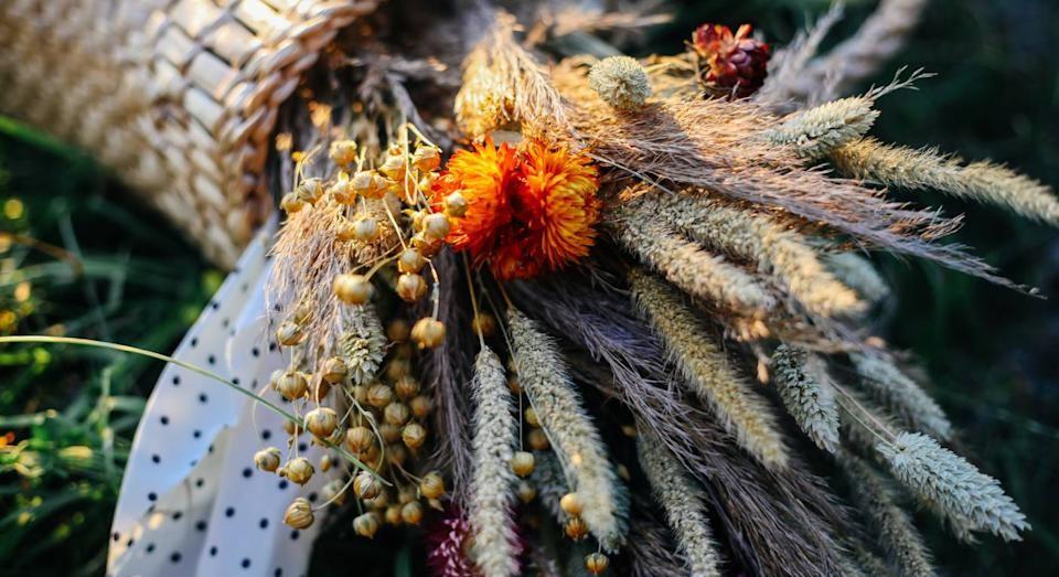 Виды сухоцветов для интерьера