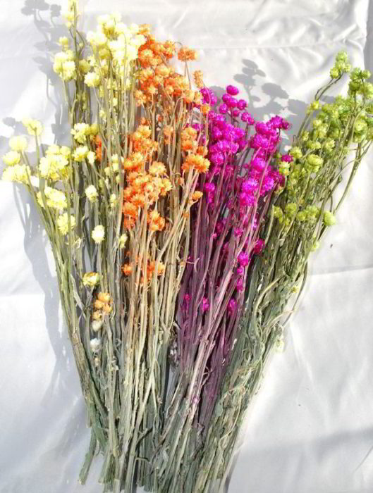 Сухоцветы для квартиры
