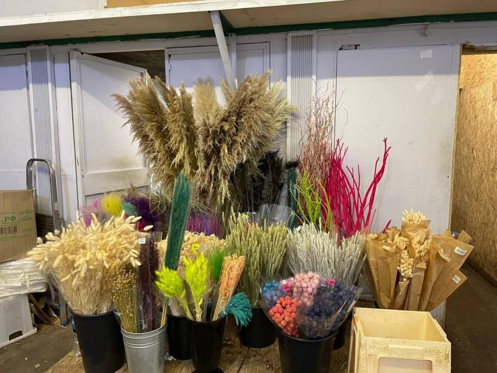 Сухоцветы на цветочном рынке на Рижской